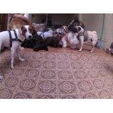 Babá de Cachorros valor no Parque João Ramalho