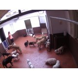 Babá para Cães como contratar no Campanário