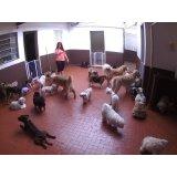 Babá para Cães contratar no Jardim Nair Conceição