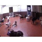 Babá para Cães por um valor bom na Cidade Monções