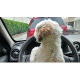 Babá para Cães valor na Vila Gomes
