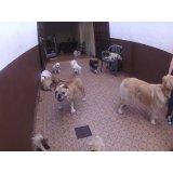 Contratar Daycare Cachorro na Vila Buarque