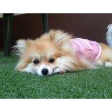 Contratar Hotelzinho Cães no Jardim Natália