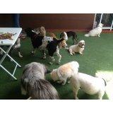 Contratar Passeadores de Cachorros no Jardim Santo Antônio de Pádua