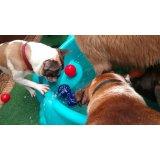 Contratar Serviço de Babá de Cachorros em Campos Elíseos