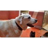 Contratar Serviço Dog Sitter em City Butantã