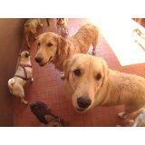 Contratar Serviços de Daycare Canino no Jardim Irene