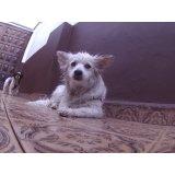 Day Care Canino contratar na Santa Cruz