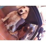 Day Care Canino em Quarta Parada