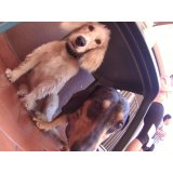 Day Care Canino no Parque Capuava