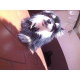 Day Care Canino preço em Caxingui