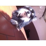 Day Care Canino preço no Parque do Pedroso