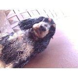 Day Care Canino preços na Vila Tramontano