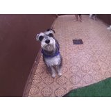 Day Care Canino valor no Jardim Tropical