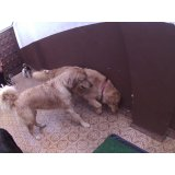 Day Care Canino valores no Pari