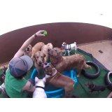 Daycare Cachorro com valor bom no Jardim Kostka