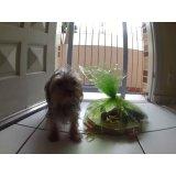 Daycare Cachorro contratar no Alto Santo André