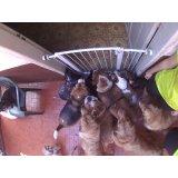 Daycare Cachorro preço na Anchieta
