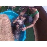 Daycare Cachorro preços na Vila Sara