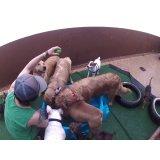 Daycare Cachorro quanto custa em média no Parque Erasmo Assunção