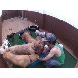 Daycare Cachorro quanto custa no Higienópolis