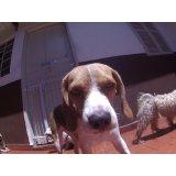 Daycare Cachorro valores em Caxingui
