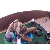 Daycare Cachorros no Jardim das Maravilhas