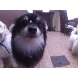 Daycare Cachorros preços na Vila Firmiano Pinto