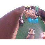 Daycare Cães na Chácara Paraíso