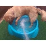 Daycare Cão no Jardim Natália