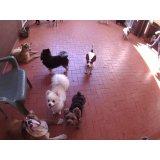 Daycare Pet preço no Jardim Bela Vista