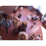 Daycare Pet quanto custa em média em City Butantã