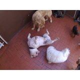 Daycare Pet quero contratar na Vila São José