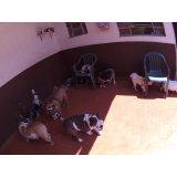 Daycare Pet valor no Jardim Santa Emília
