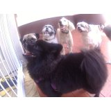 Daycare Pets em Mauá