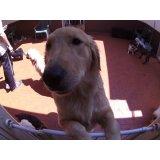Dog Care com valor baixo na Vila Internacional