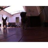 Dog Care na Chácara Pouso Alegre