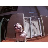 Dog Care no Bairro Barcelona