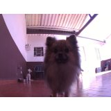 Dog Care preços em Boaçava