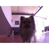 Dog Care preços no Ibirapuera