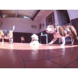 Dog Care quanto custa em média na Vila Elisio
