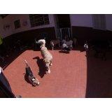 Dog Care quanto custa na Vila Alba