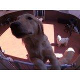 Dog Care valores na Chácara Flora