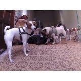 Dog Sitter contratar na Vila Canero