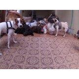 Dog Sitter em Mercado