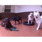 Dog Sitter em Santa Maria