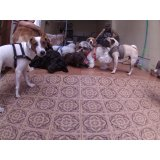 Dog Sitter na Chácara do Castelo