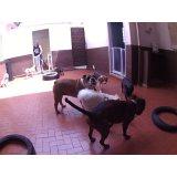 Dog Sitter onde encontrar no Jardim Irene