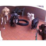 Dog Sitter preços no Higienópolis