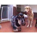 Dog Sitter qual empresa tem na Chácara Flora